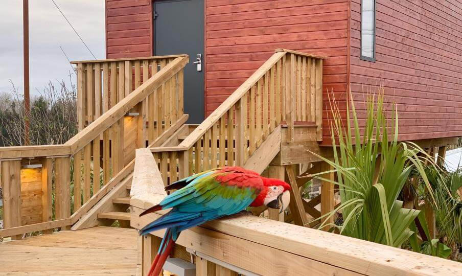 perroquet lodge village parrot world
